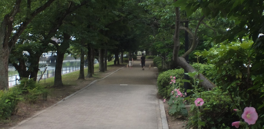 広島京橋川川沿い