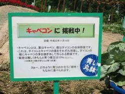 shimanami2.jpg